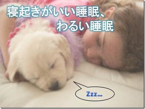 sleeping dog」